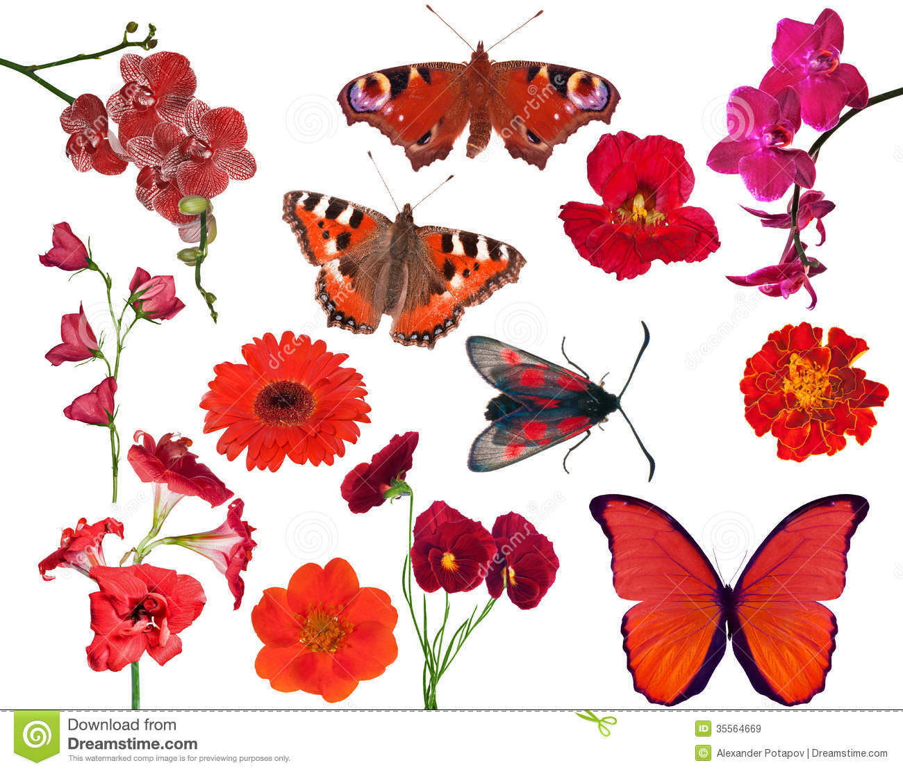 Set Of Red Color Flowers And Butterflies Isolated On White Stock ...