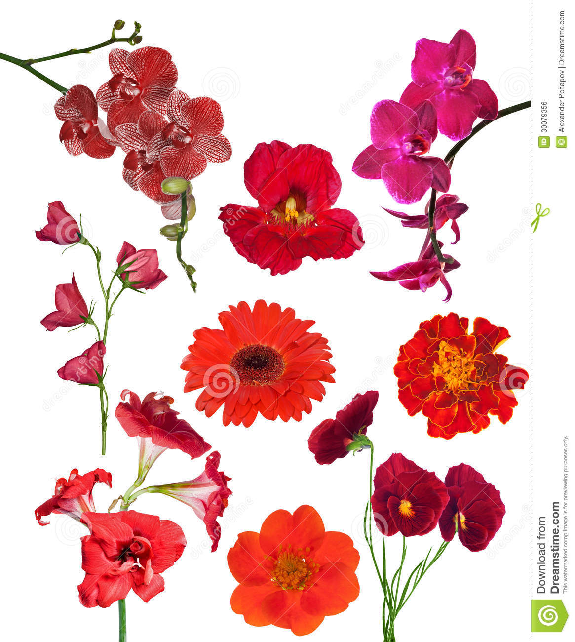Set Of Nine Red Color Flowers Isolated On White Stock Photo - Image ...