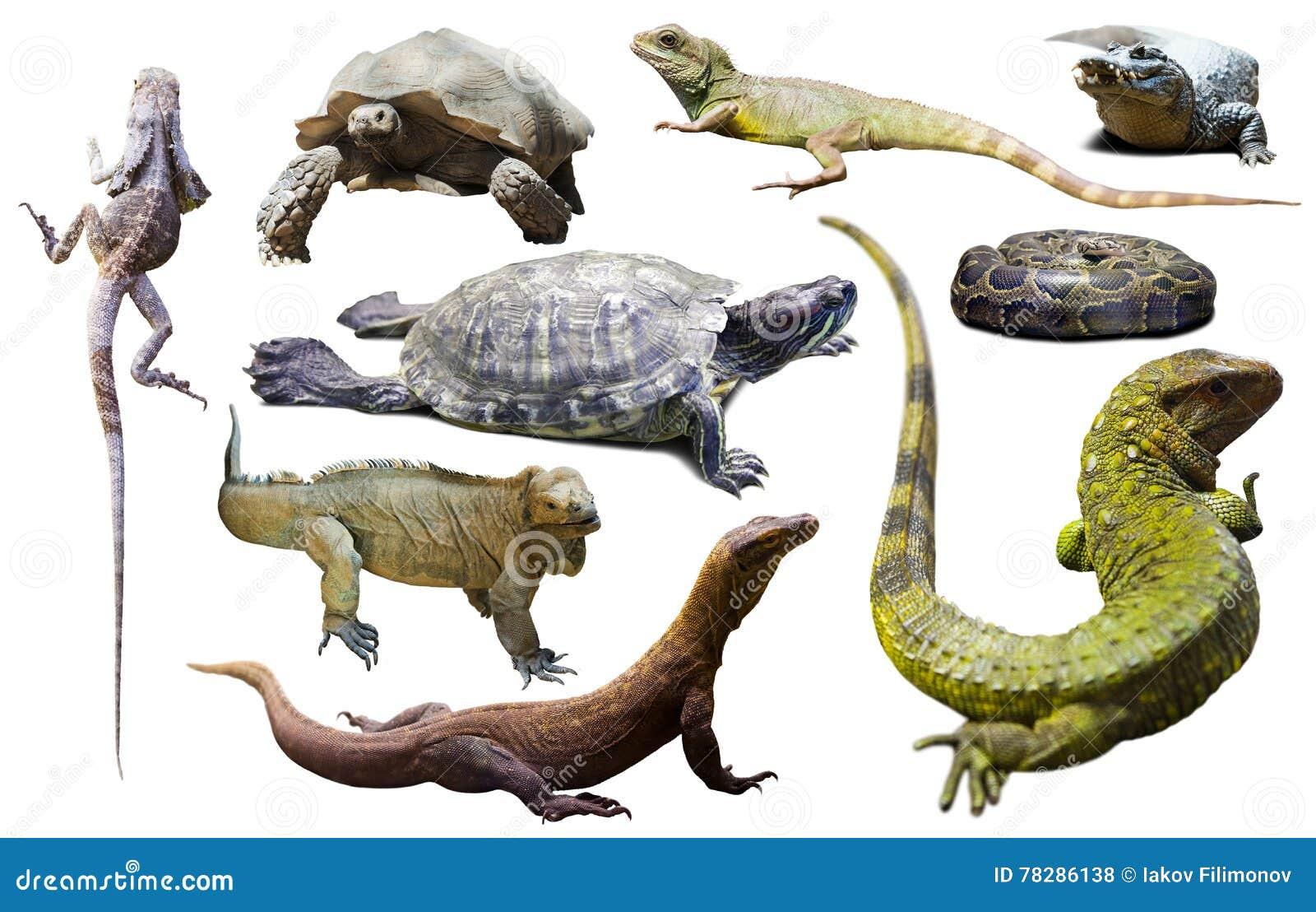 A 2 Z Reptiles Set of reptiles...