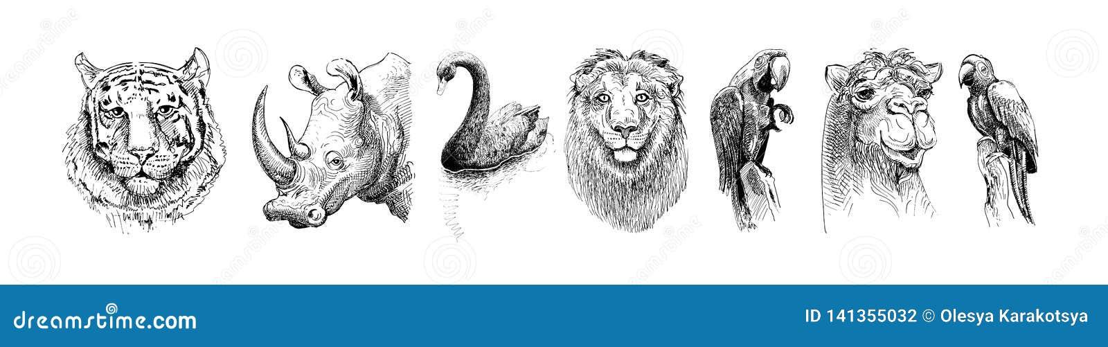 Set of safari head animals, black and white sketch drawing
