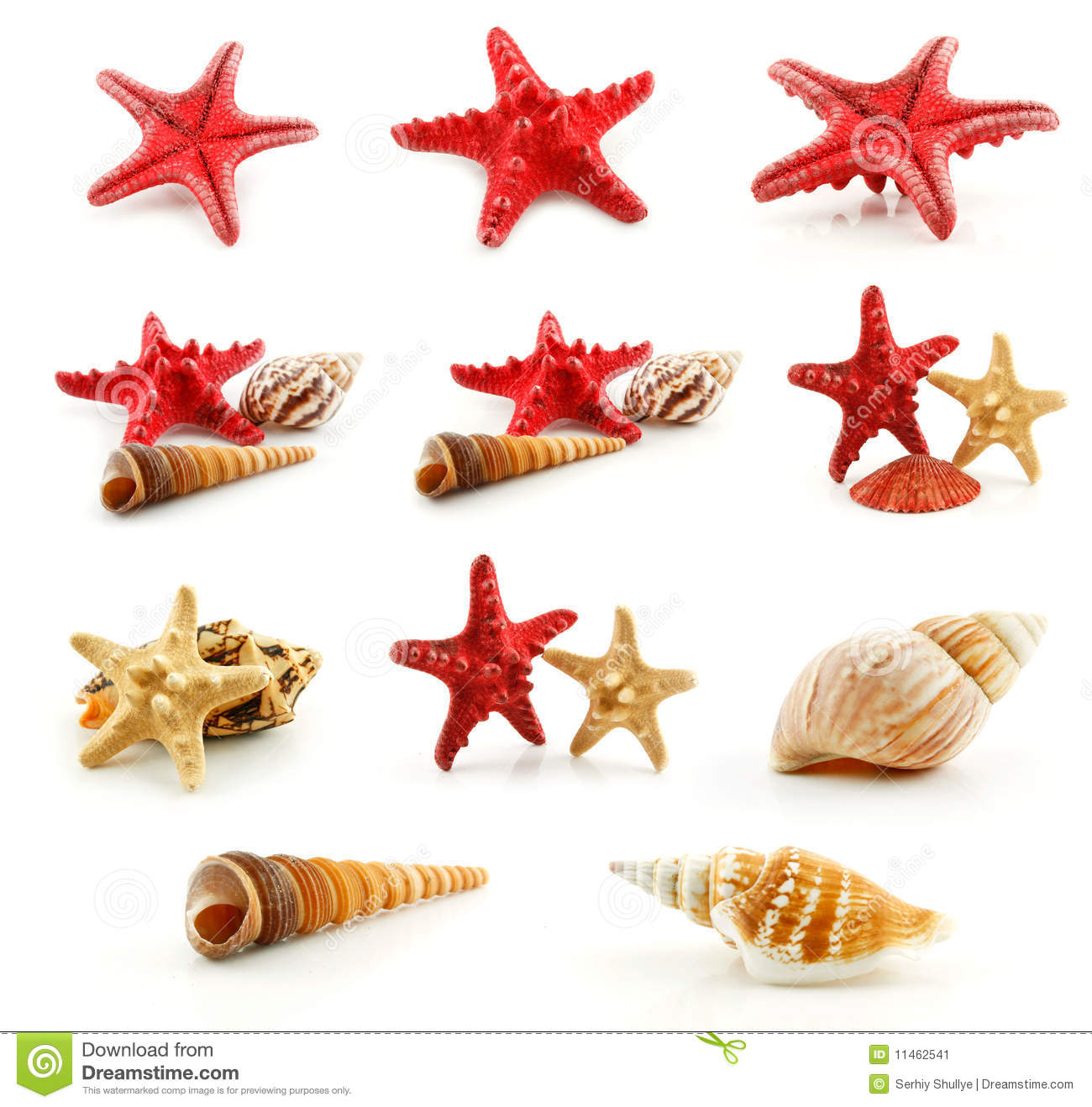 Download Set Of Seashells (Starfish And Scallop) Isolated Stock Image - Image of macro, colored: 11462541