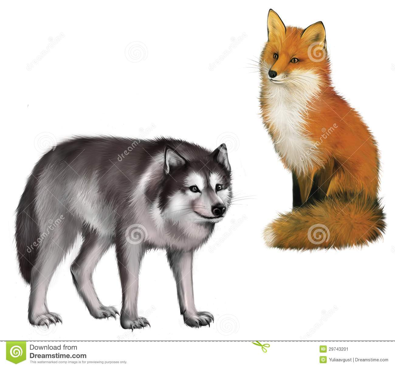 Sitting Fox And Wolf. Isolated Realistic Illustrat Stock