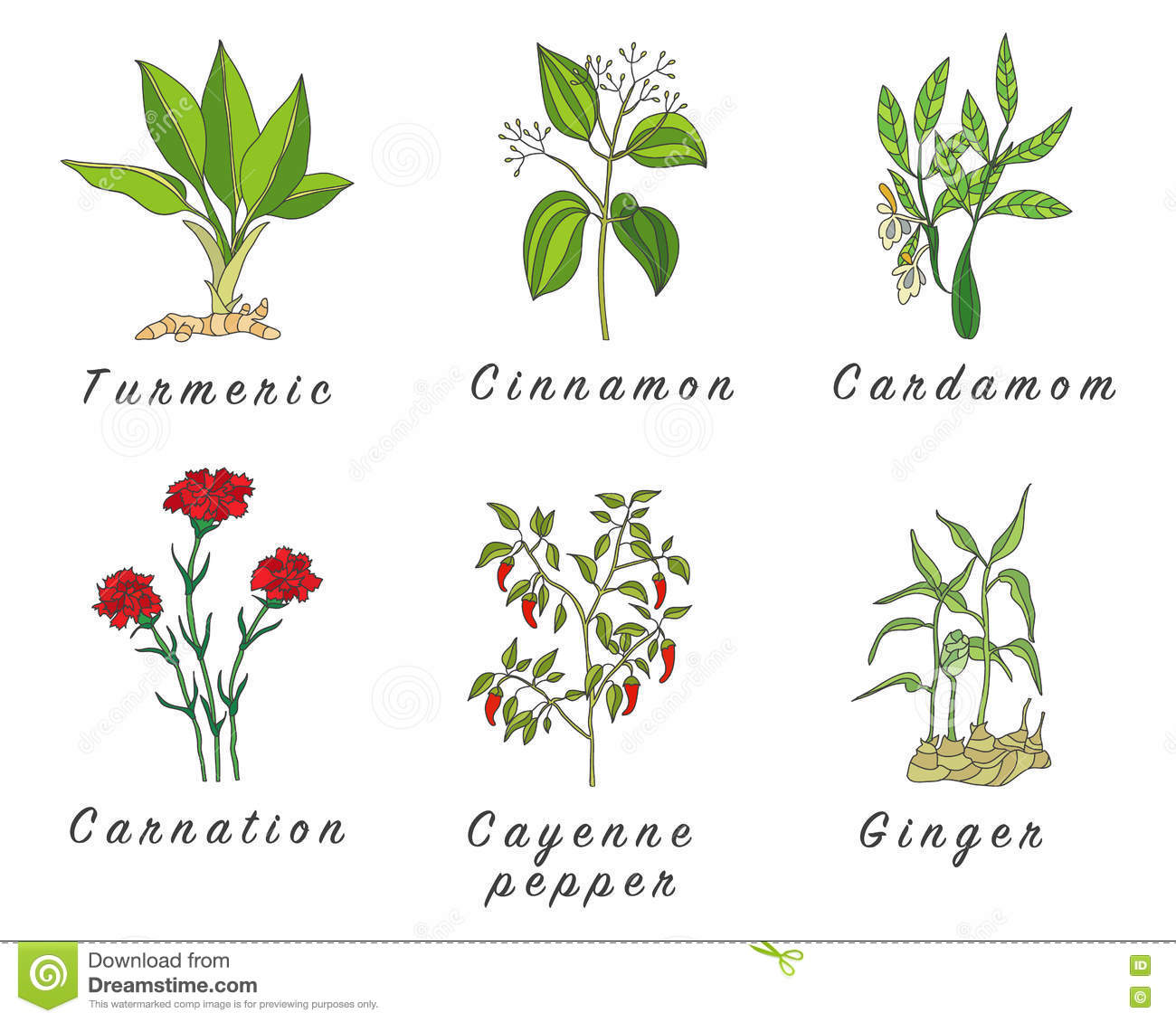 healing plants and herbs essay Free essay examples, how to write essay on herbal medicine herbs plants good example essay, research paper, custom writing write my essay on medicine herbal herbs.
