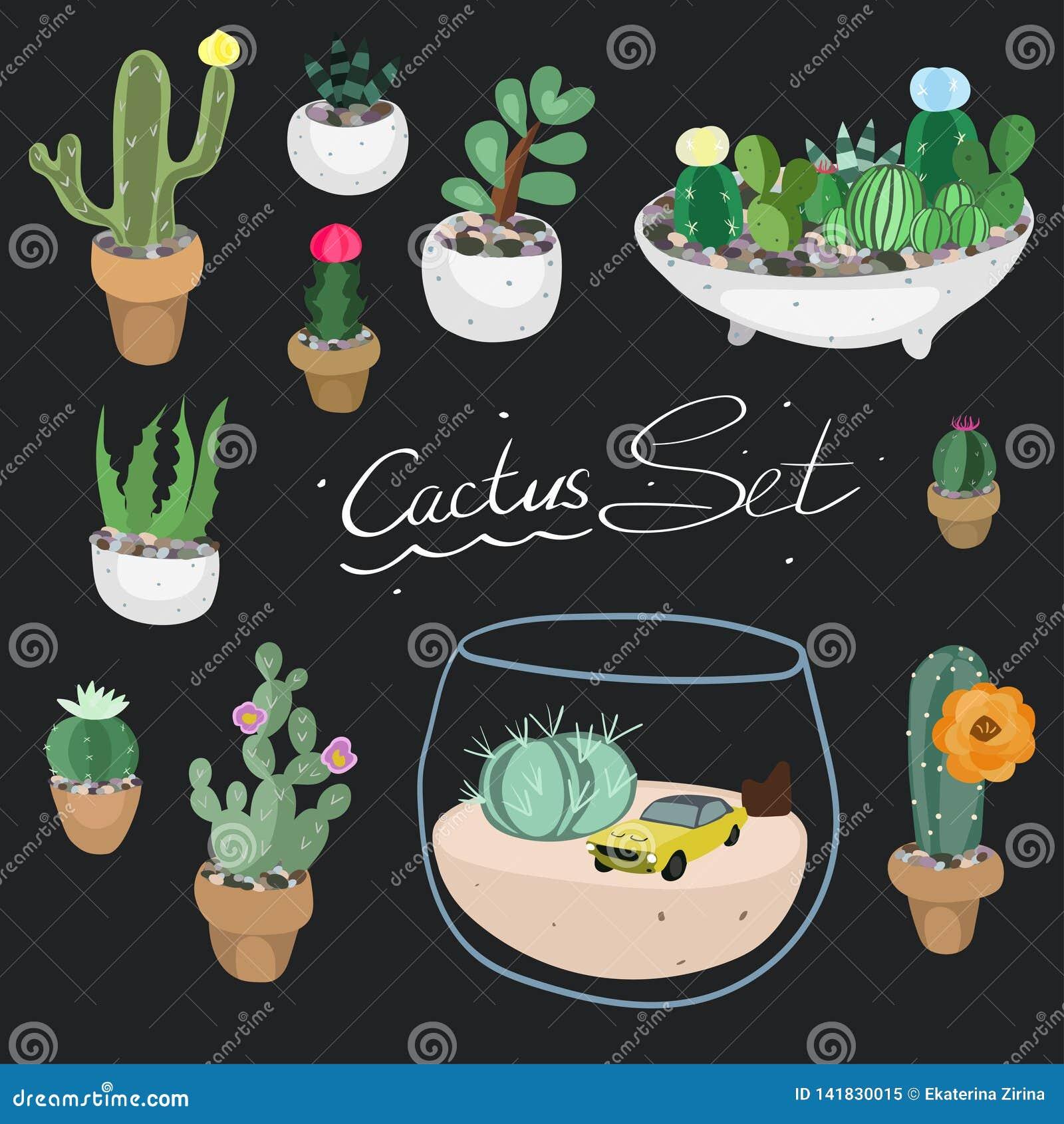 Set spiny suckulent typ för kaktusväxt