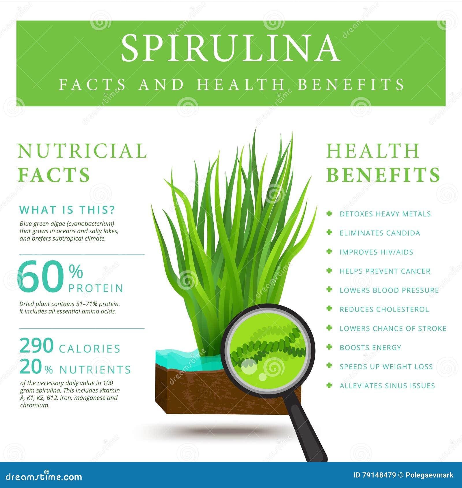 supplement facts template - set of spirulina algae infographics banner arthrospira