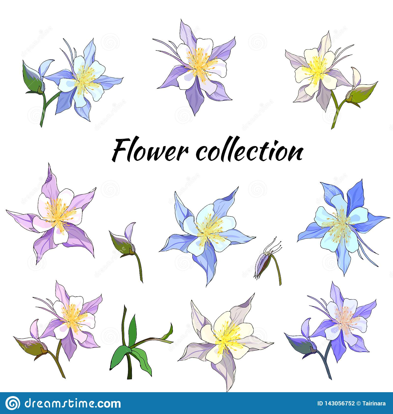 Set of spring flowers of pink and purple on a white background. Aquilegia. Vector illustration drawn by hand