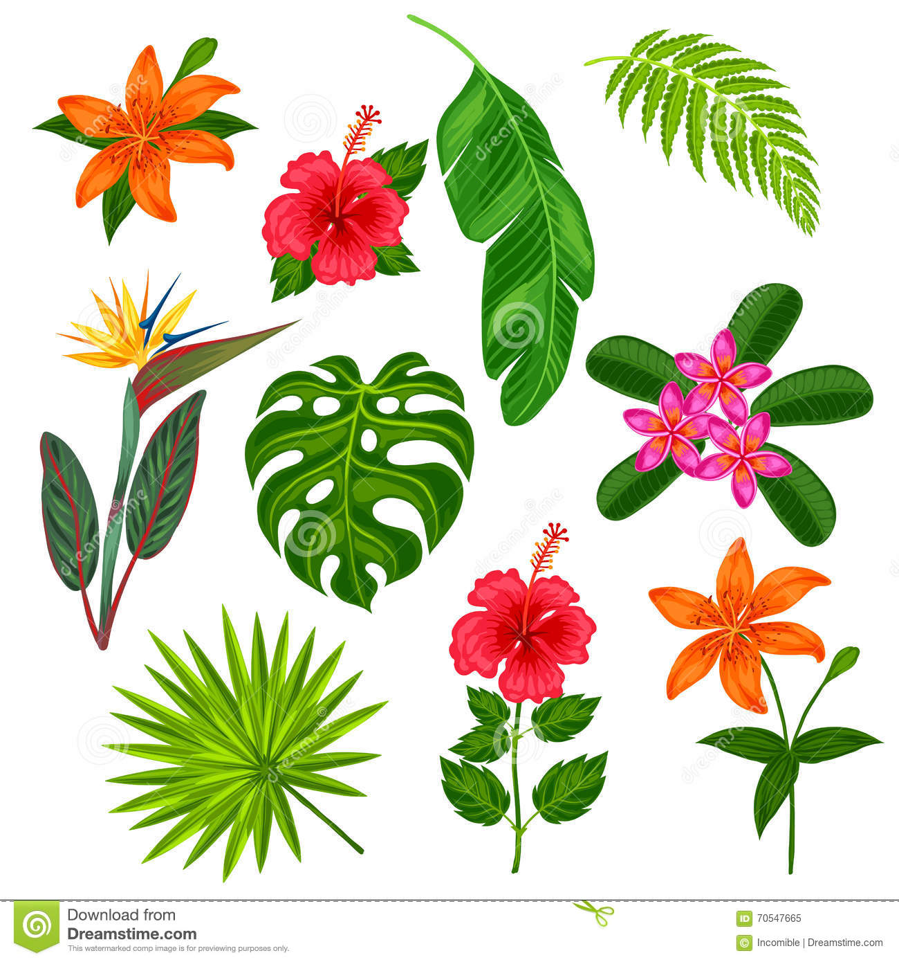 set of stylized tropical plants  leaves and flowers