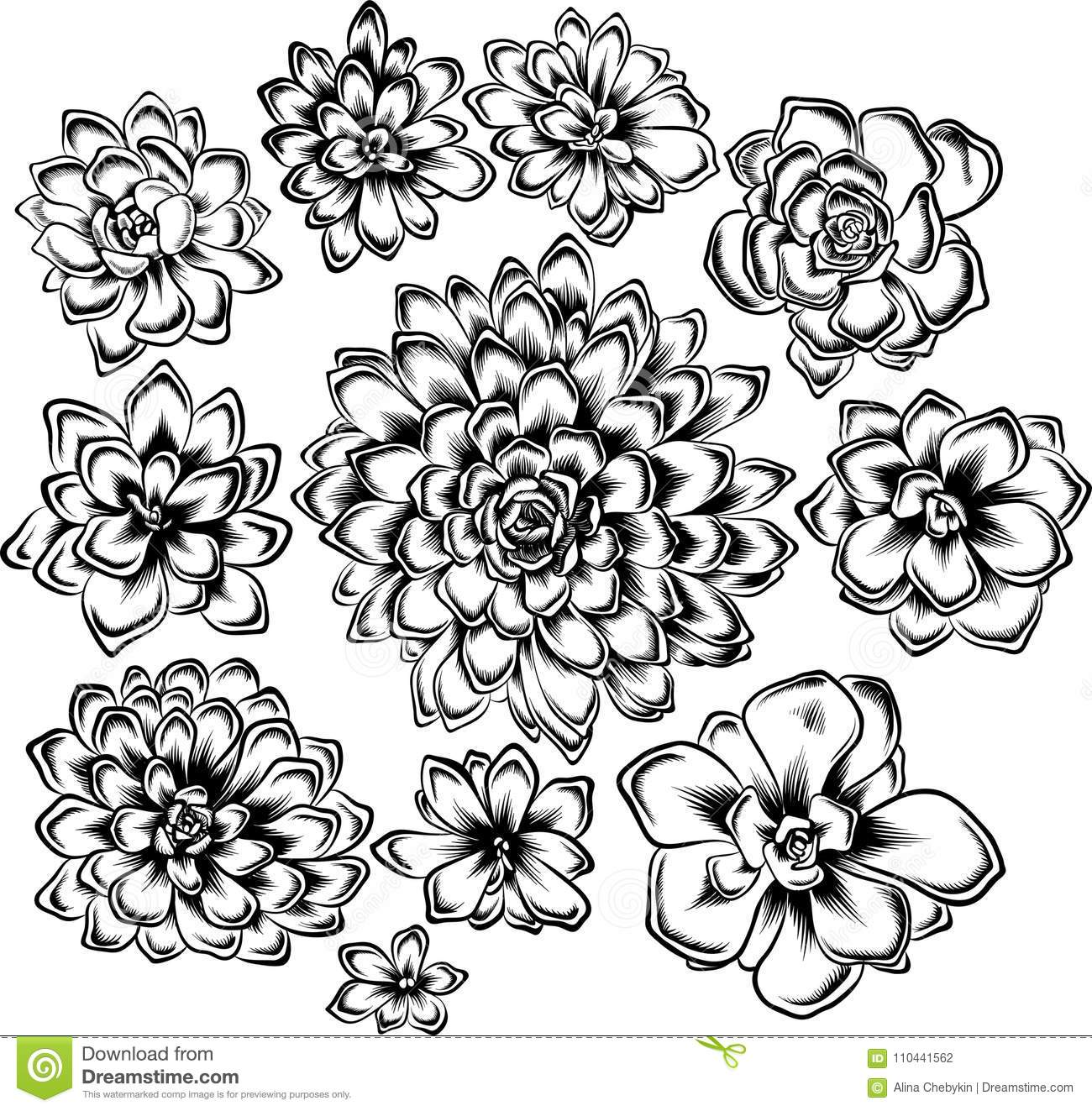 Set Of Succulents Flowers Drawings Stock Vector Illustration Of