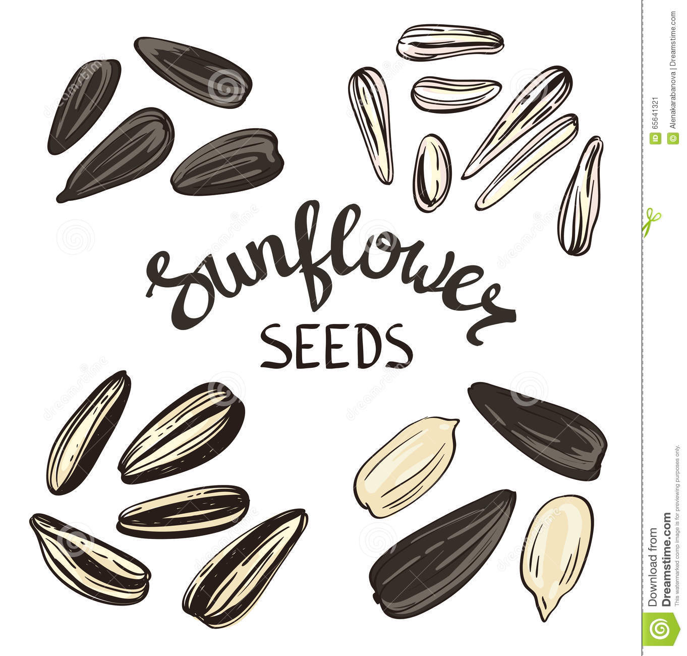 david sunflower seeds clipart - photo #25