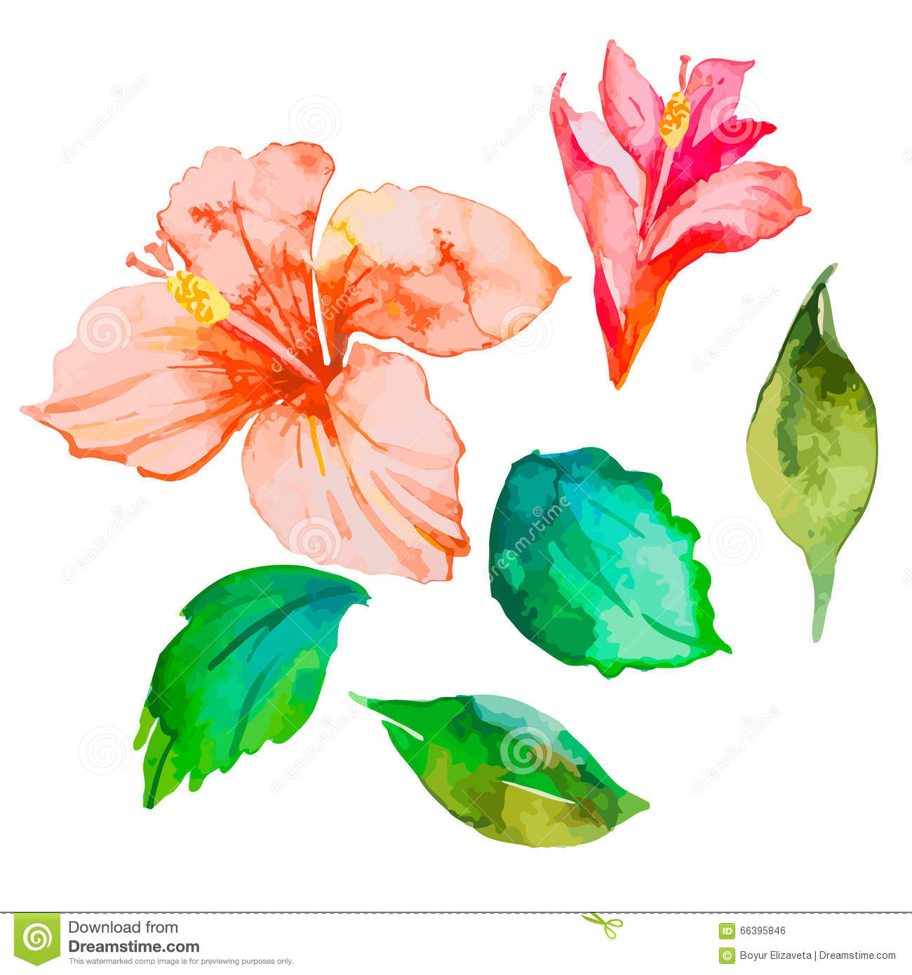 Set Of Tropical Flowers Hibiscus Leaves Watercolor Vector Stock