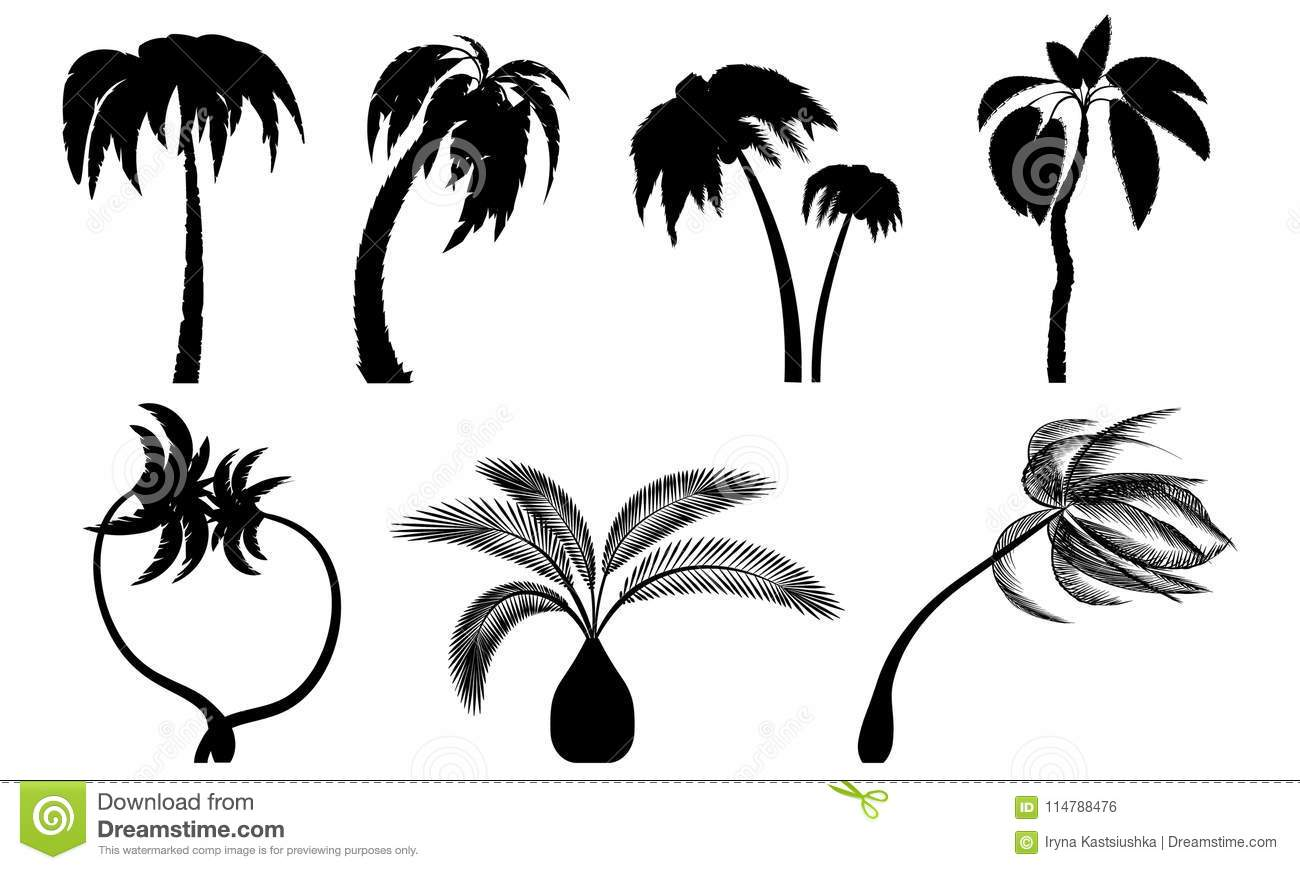 Set tropical palm trees with leaves, mature and young plants.