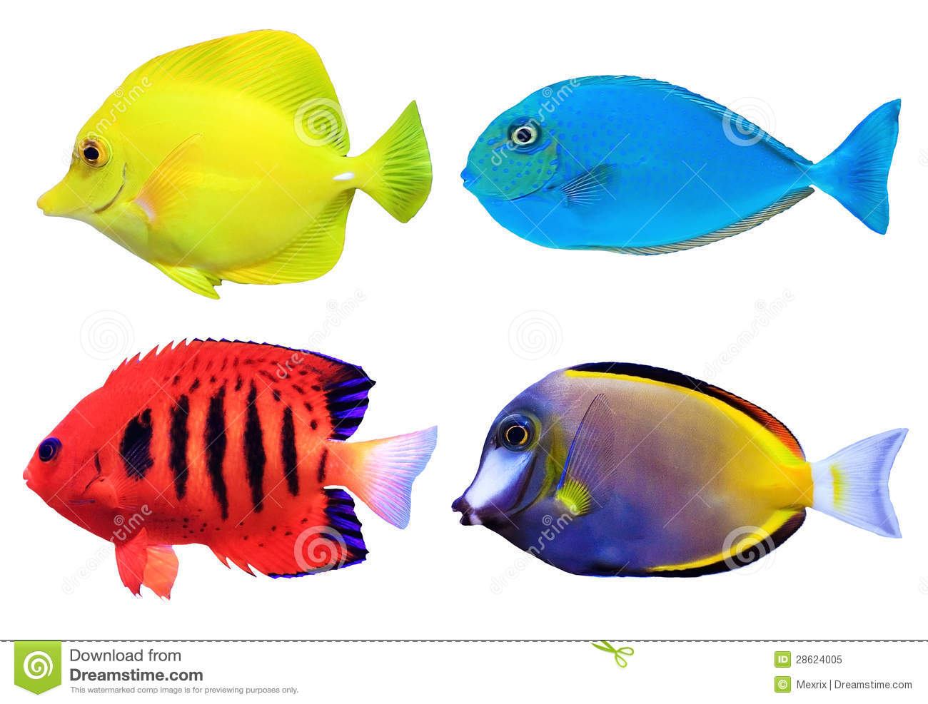 tropical fish breeding business plan