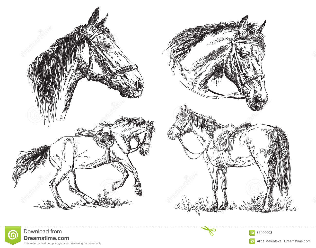 horse head with bridle vector hand drawing illustration