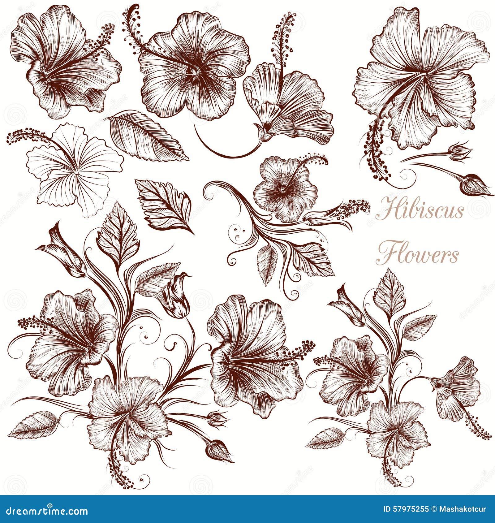Set of vector hand drawn hibiscus flowers stock vector set of vector hand drawn hibiscus flowers izmirmasajfo