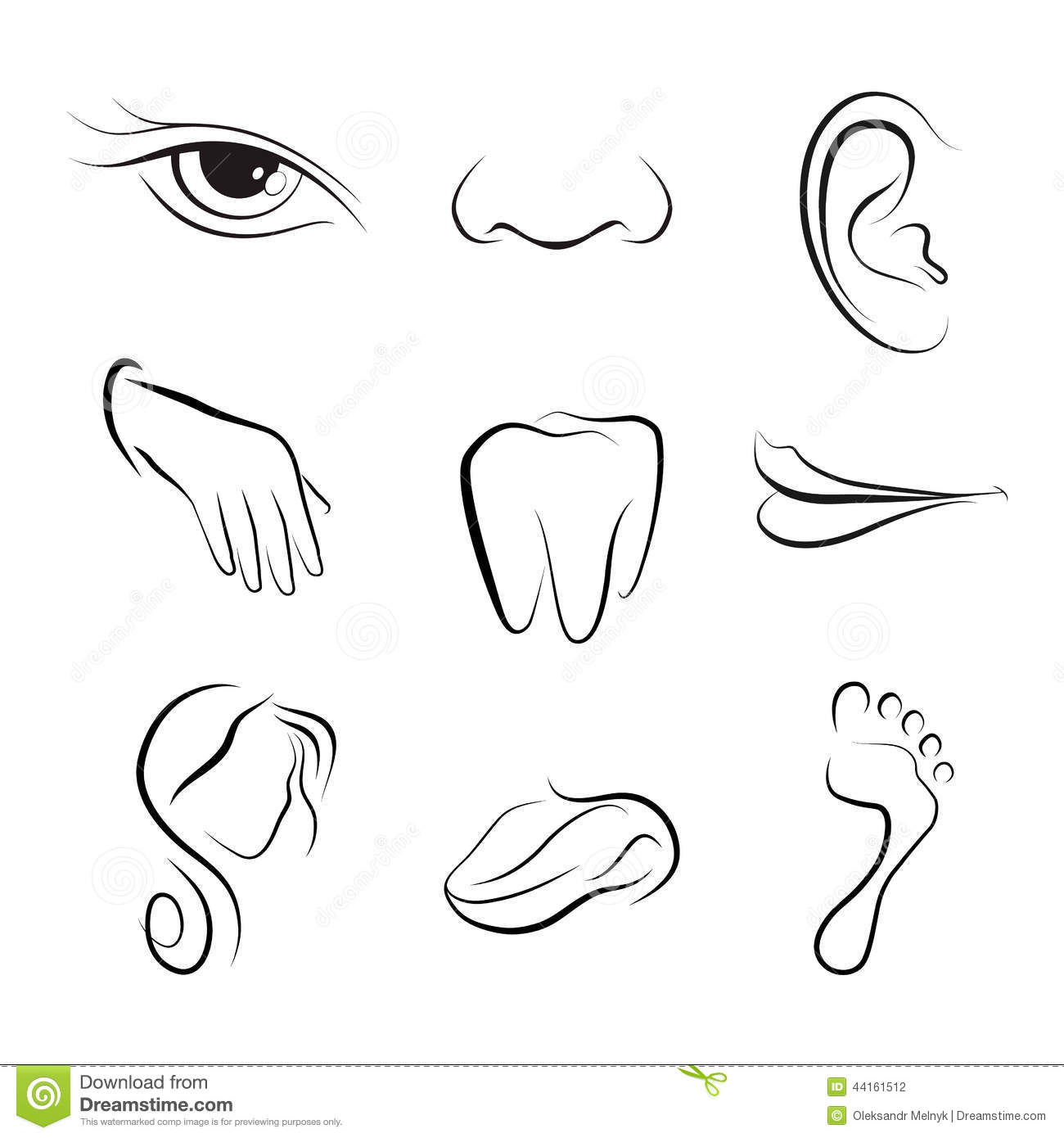 The Gallery For Gt Female Nose Vector