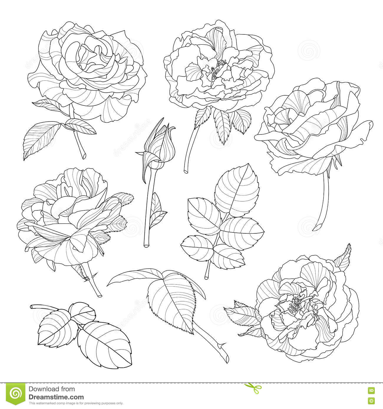 Set Of Vector Rose Flowers Black And White Outline Hand Drawn Rose