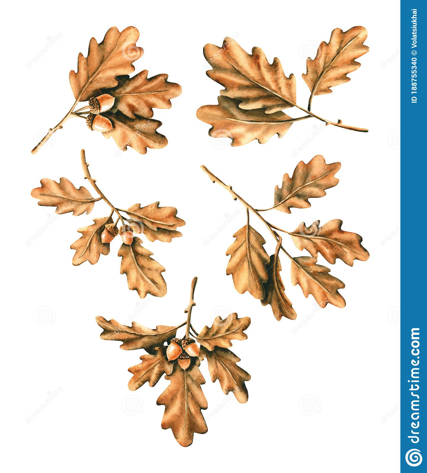 Set Of Watercolor Branches With Leaves And Acorns Hand Drawn Illustration Is Isolated On White Painted Golden Foliage Stock Illustration Illustration Of Boho Background 188755340