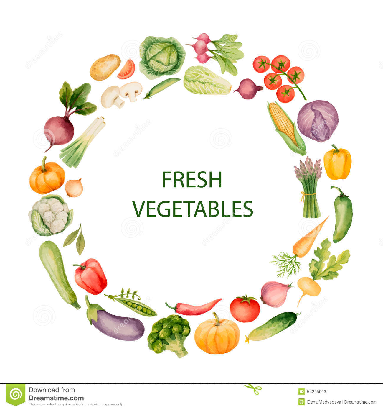 Set Of Watercolor Vegetables Stock Vector Image 54295003