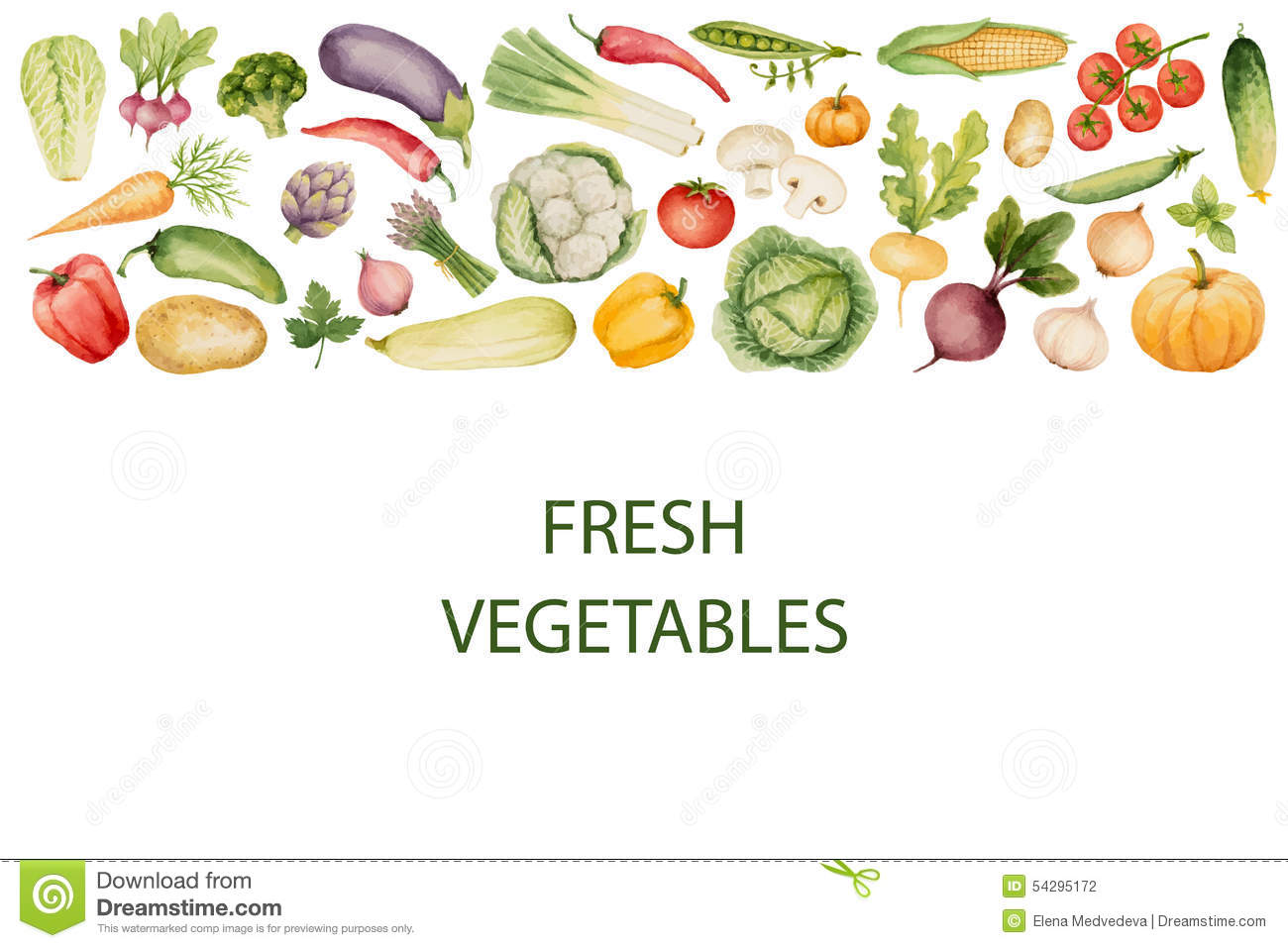set of watercolor vegetables stock vector illustration of drawn