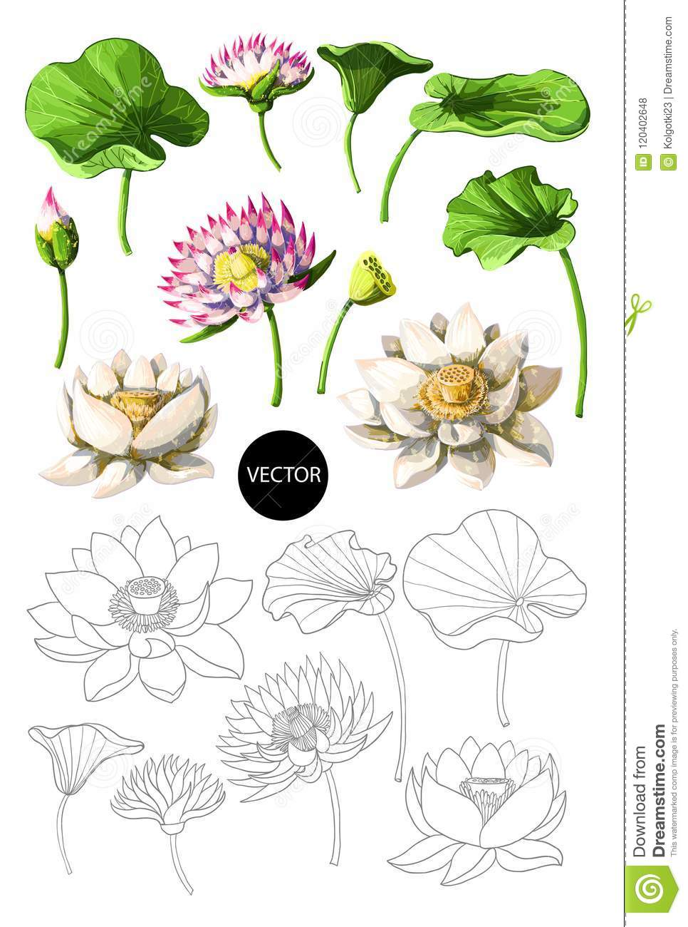Set of waterlily hand draw isolated vector illustration stock set of waterlily hand draw isolated vector illustration izmirmasajfo
