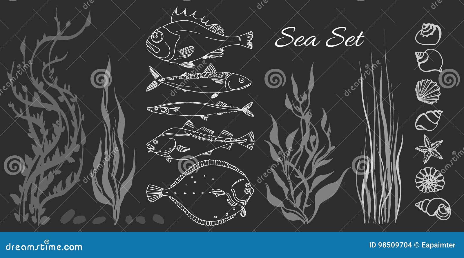 Set of white sea fish, seaweed, seashell. Perch, cod, mackerel, flounder, saira.