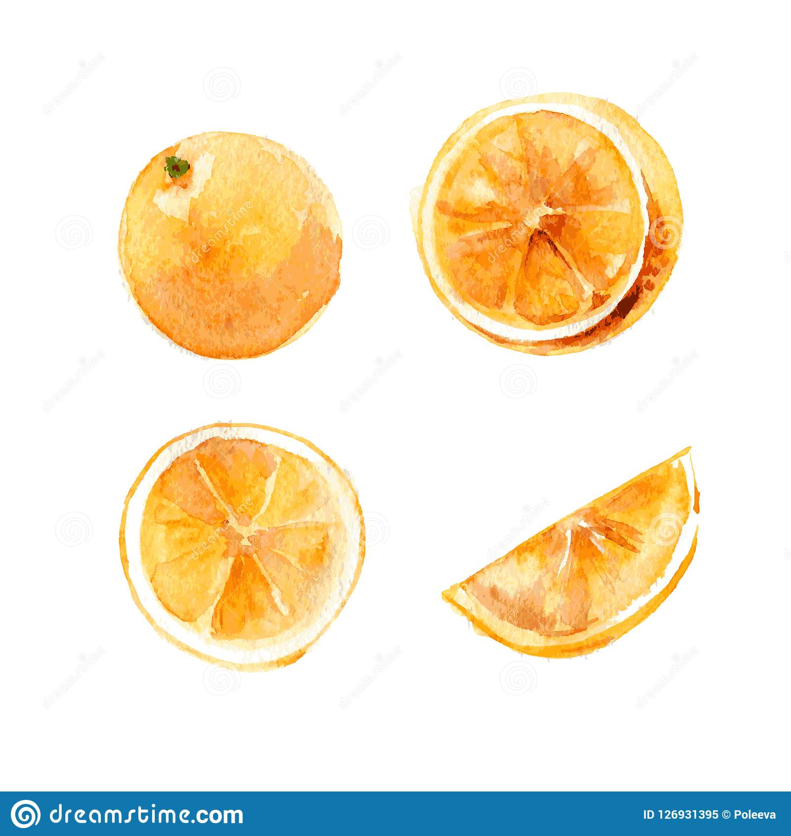 Set of whole and cut oranges on a white background. Illustration, hand-drawn watercolor. Vector.