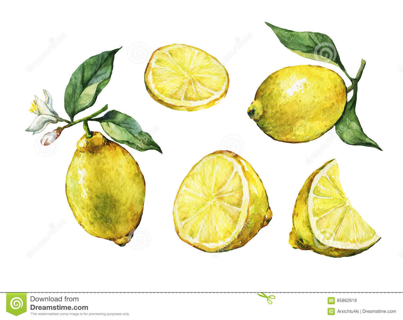 Set with whole and slice fresh citrus fruit lemon with green leaves and flowers.