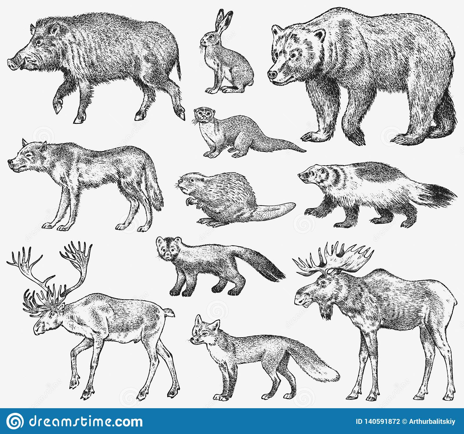 Set of Wild animals. Brown Grizzly Bear Forest Moose Red Fox North Boar Wolf Sable Badger Gray Hare Reindeer River otter