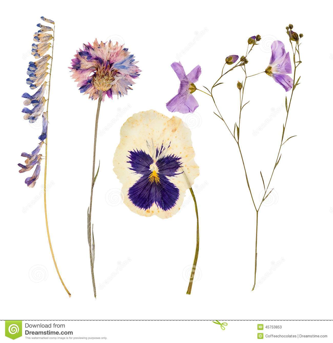Set Wild Dry Pressed Flowers And Leaves Stock Image