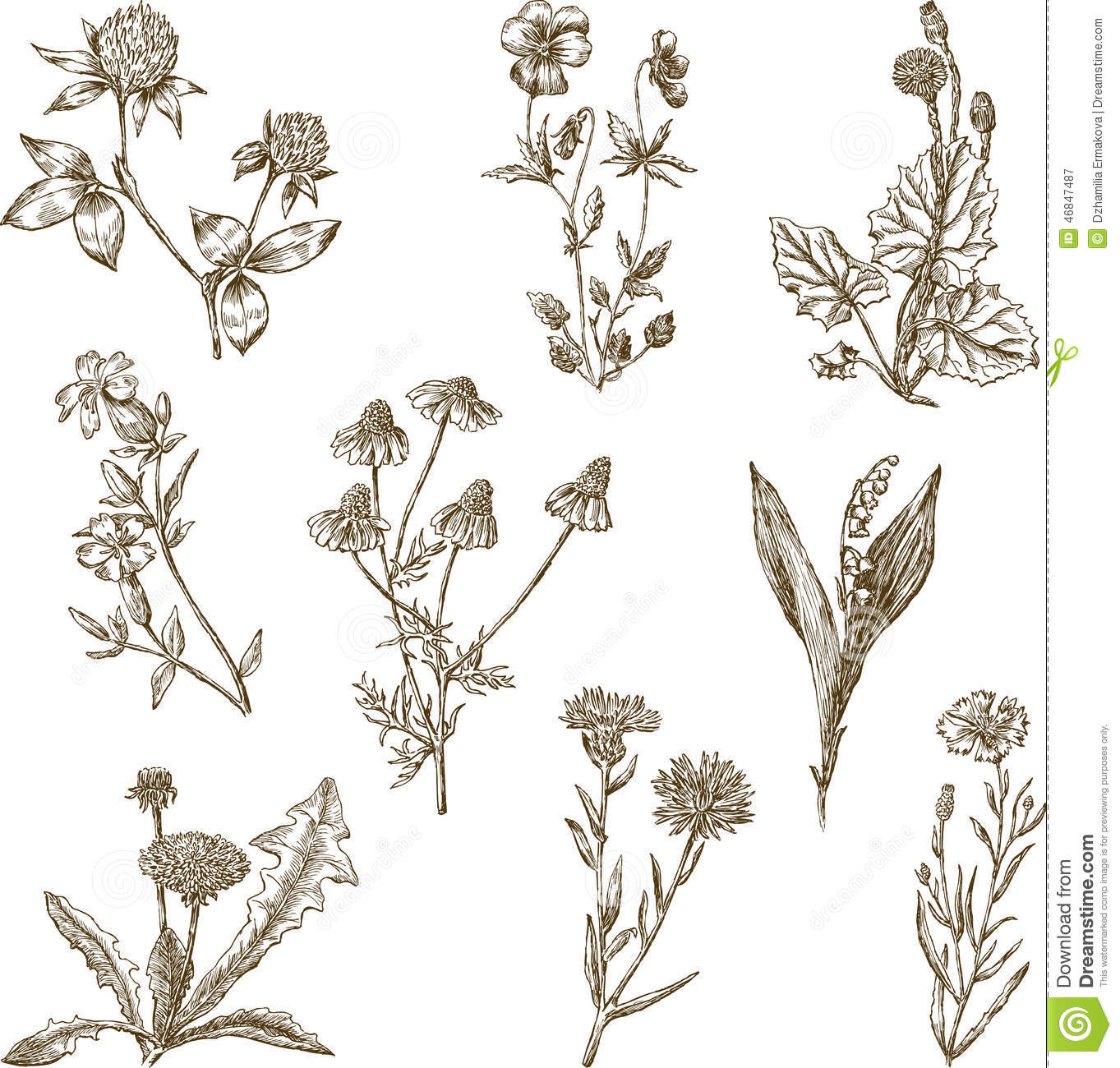 Uncategorized Different Flower Drawings set of the wild flowers stock photo image 46847487 royalty free photo