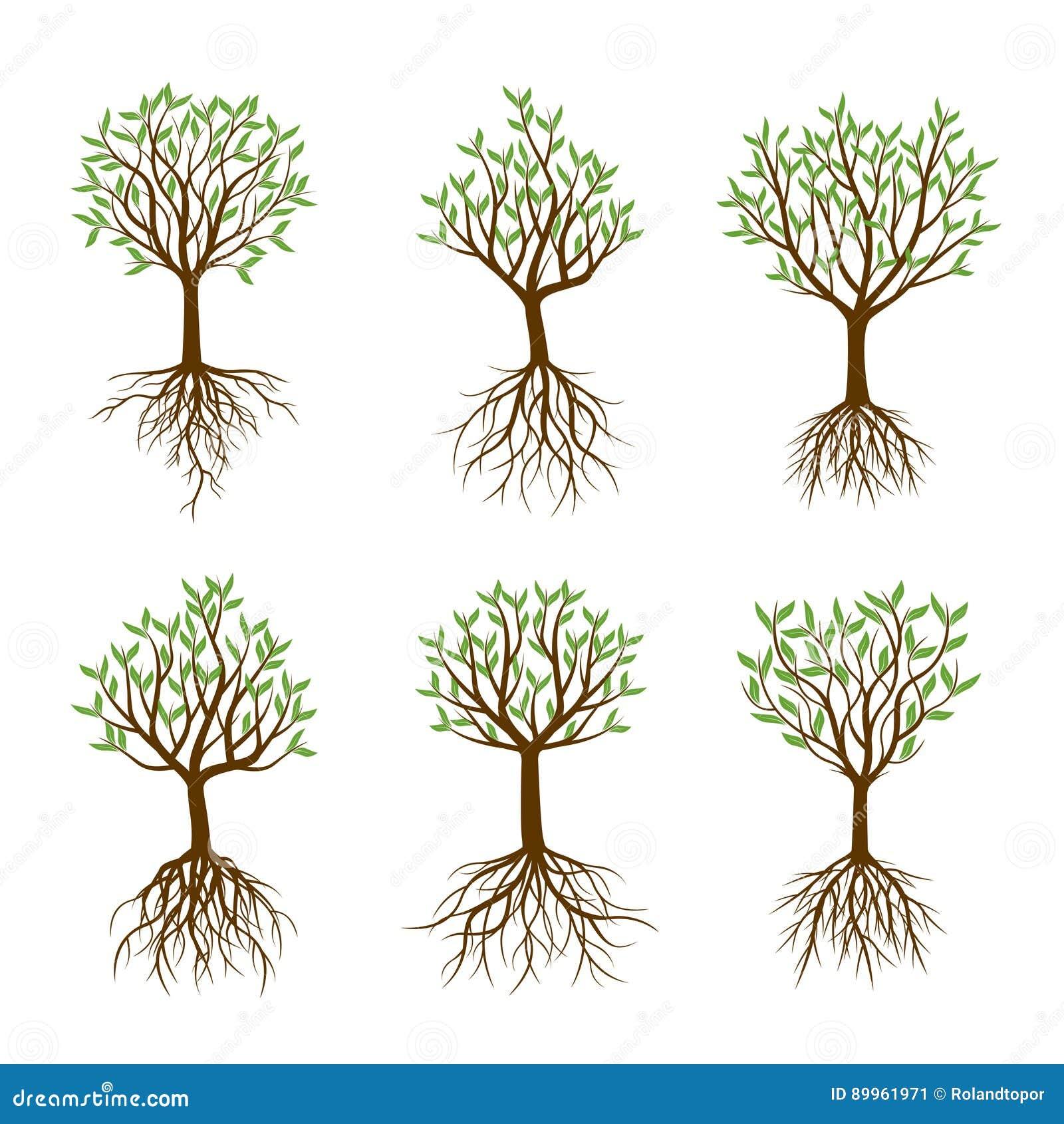 Set wiosen drzewa z korzeniami