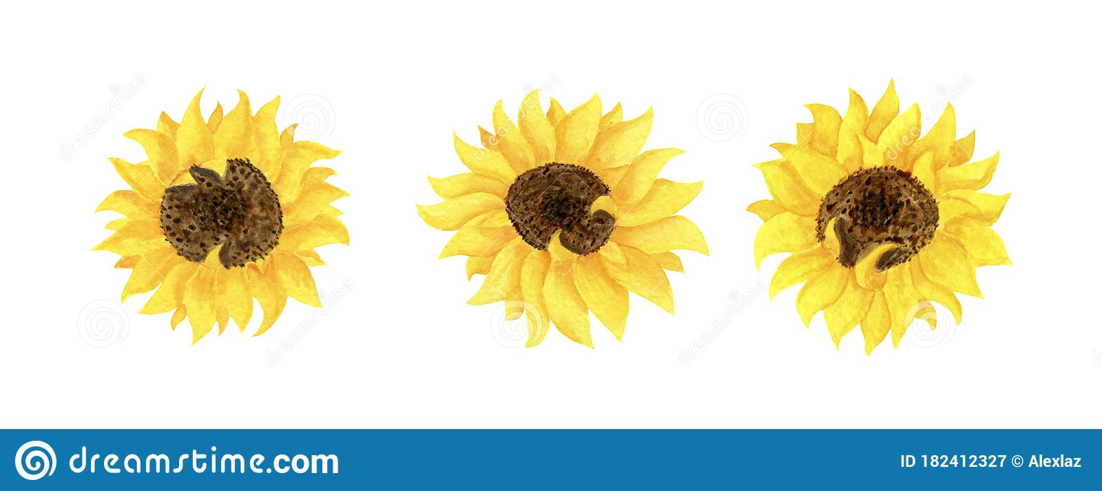 Sunflower Clipart Black And White, Transparent PNG Clipart Images Free  Download - ClipartMax