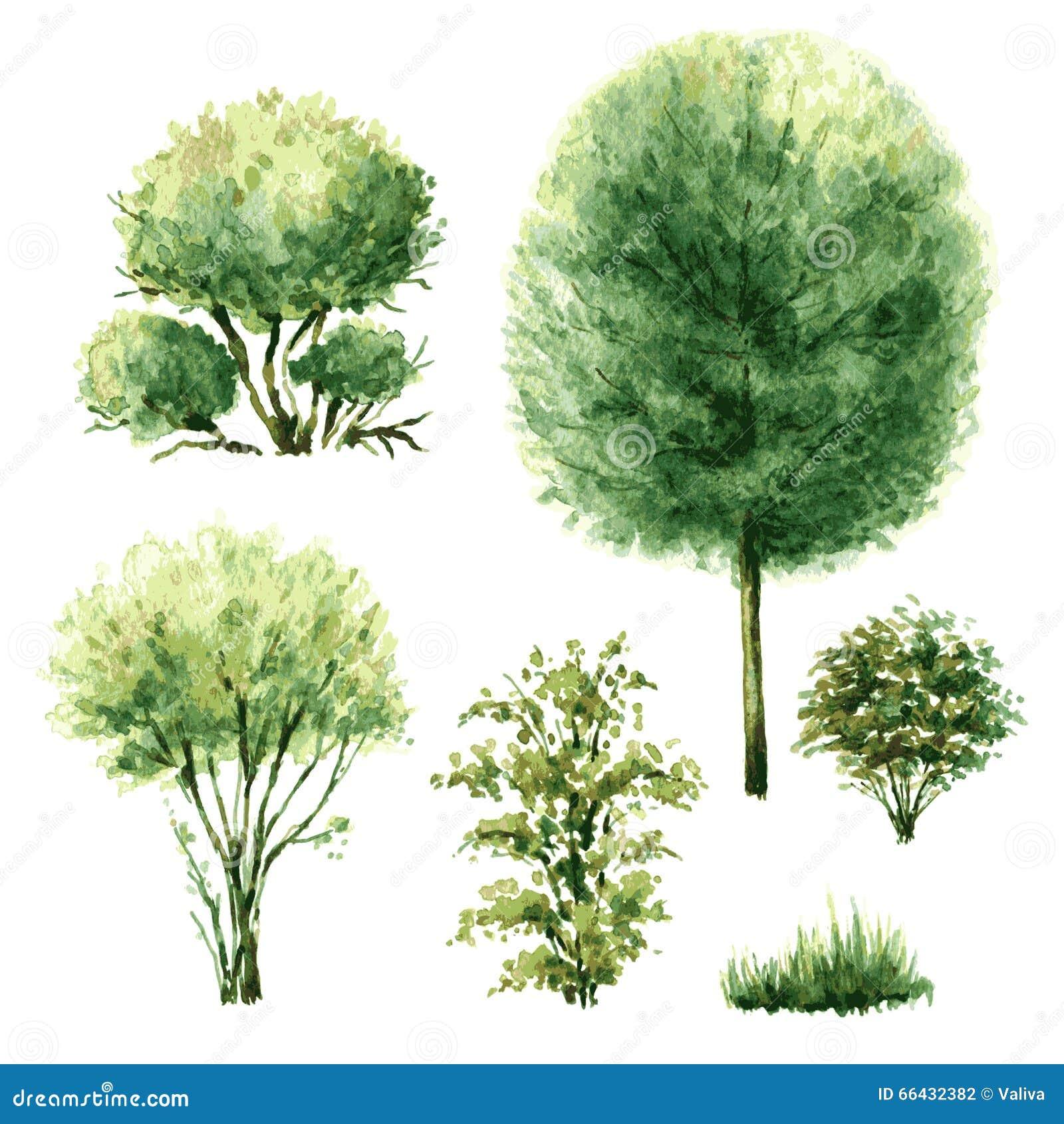 Set zieleni drzewa i krzaki