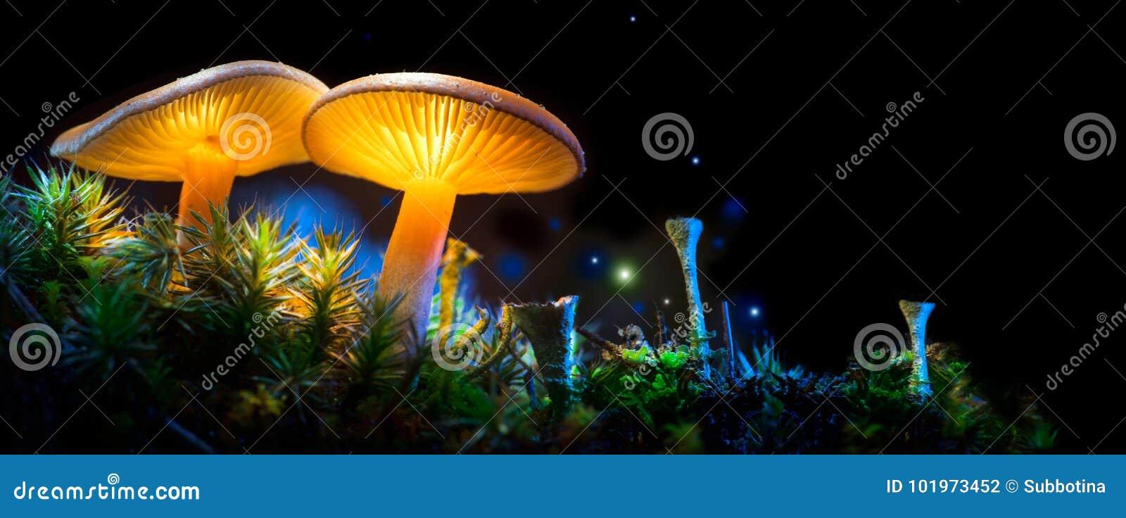 Seta Setas que brillan intensamente de la fantasía en bosque de la oscuridad del misterio