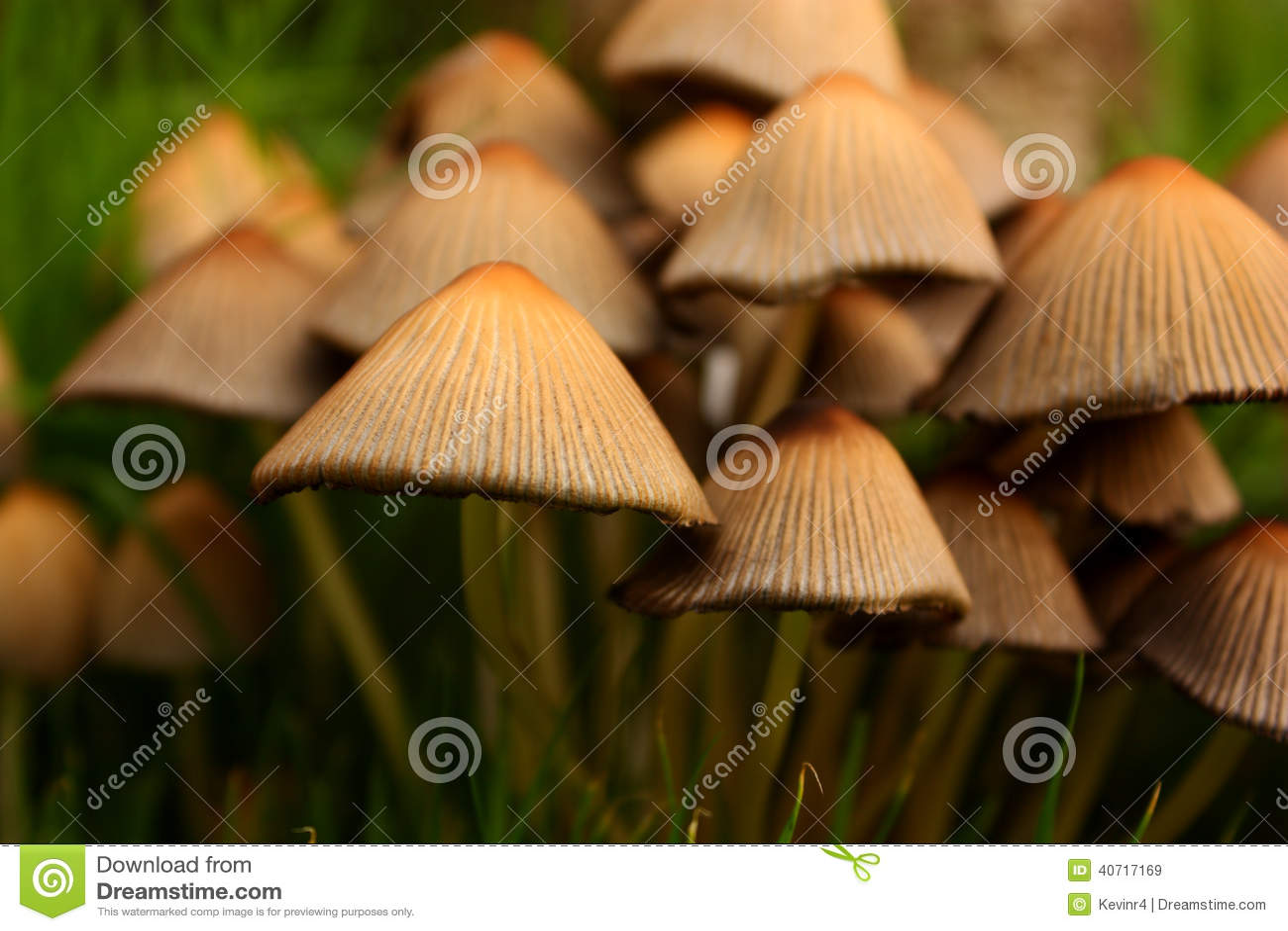 Setas del jard n foto de archivo imagen 40717169 for Setas jardin