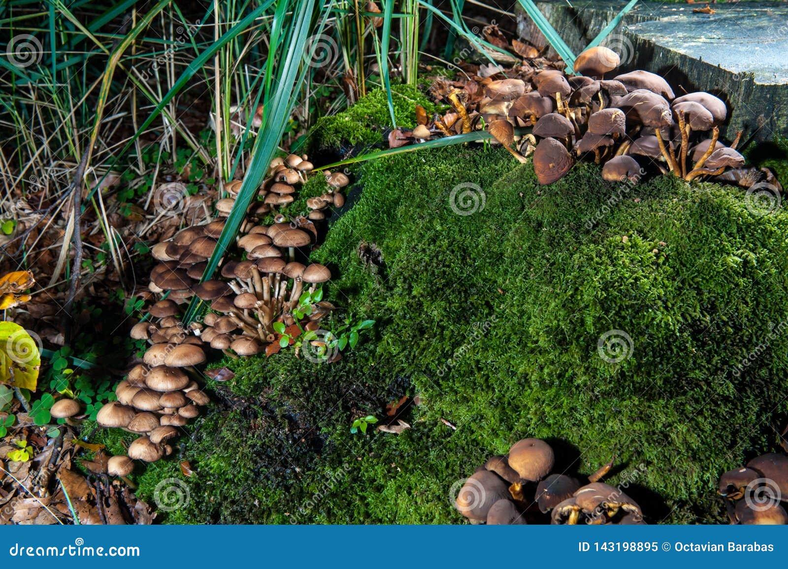 Setas en bosque en tronco de árbol