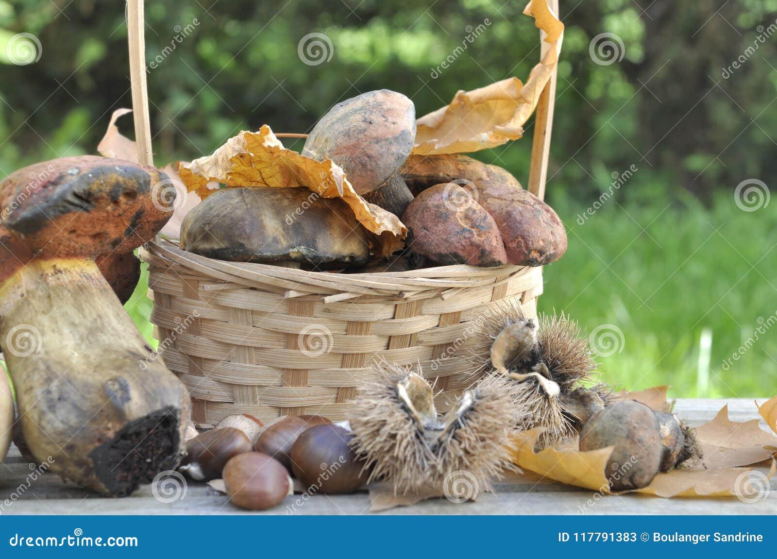 Setas y casta as en jard n imagen de archivo imagen de veh culo 117791383 Setas de jardin