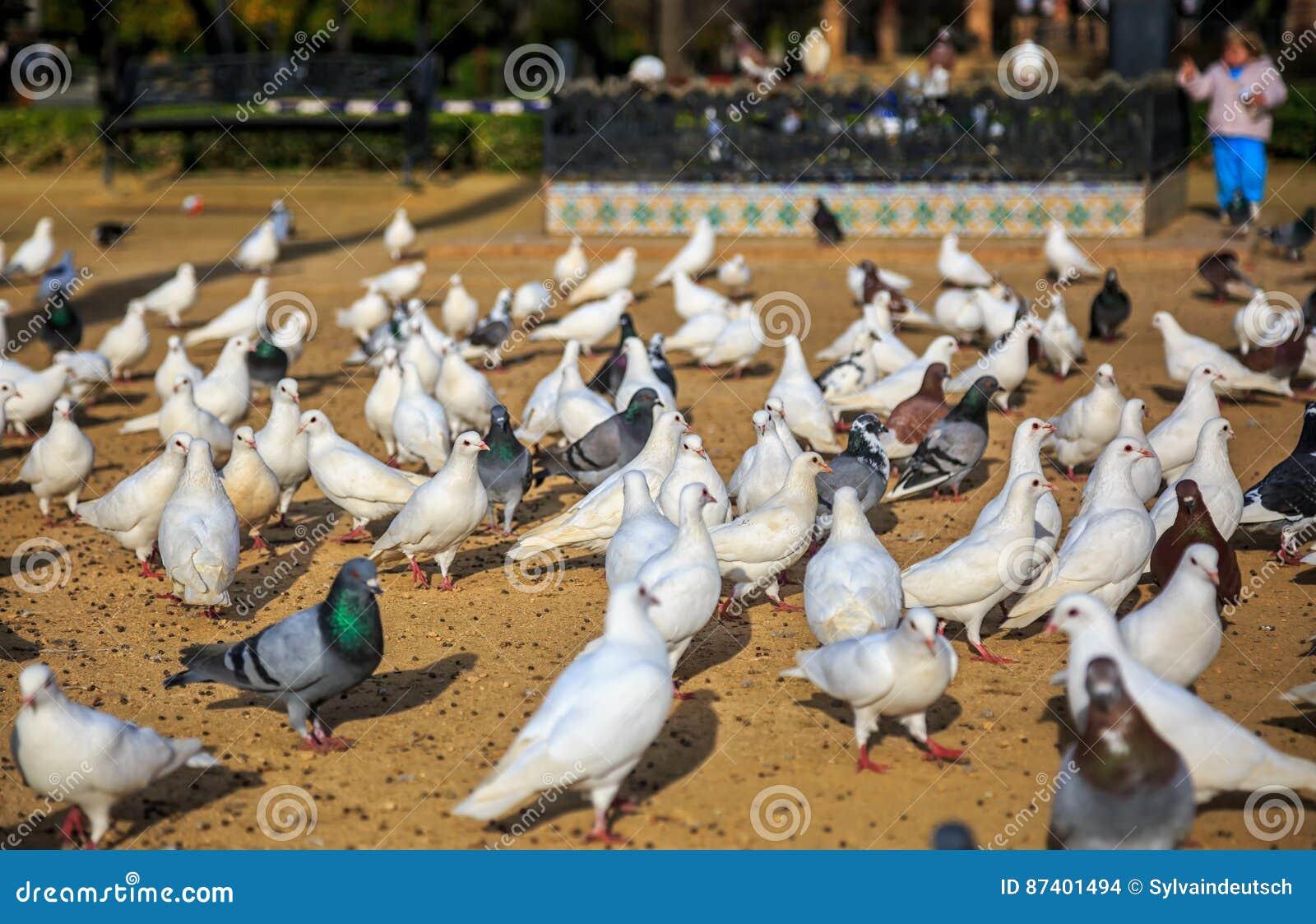 Setzen Sie gedrängt von den Vögeln