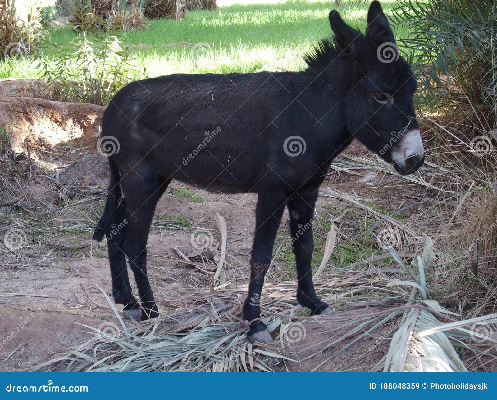 chaud noir fille ânes