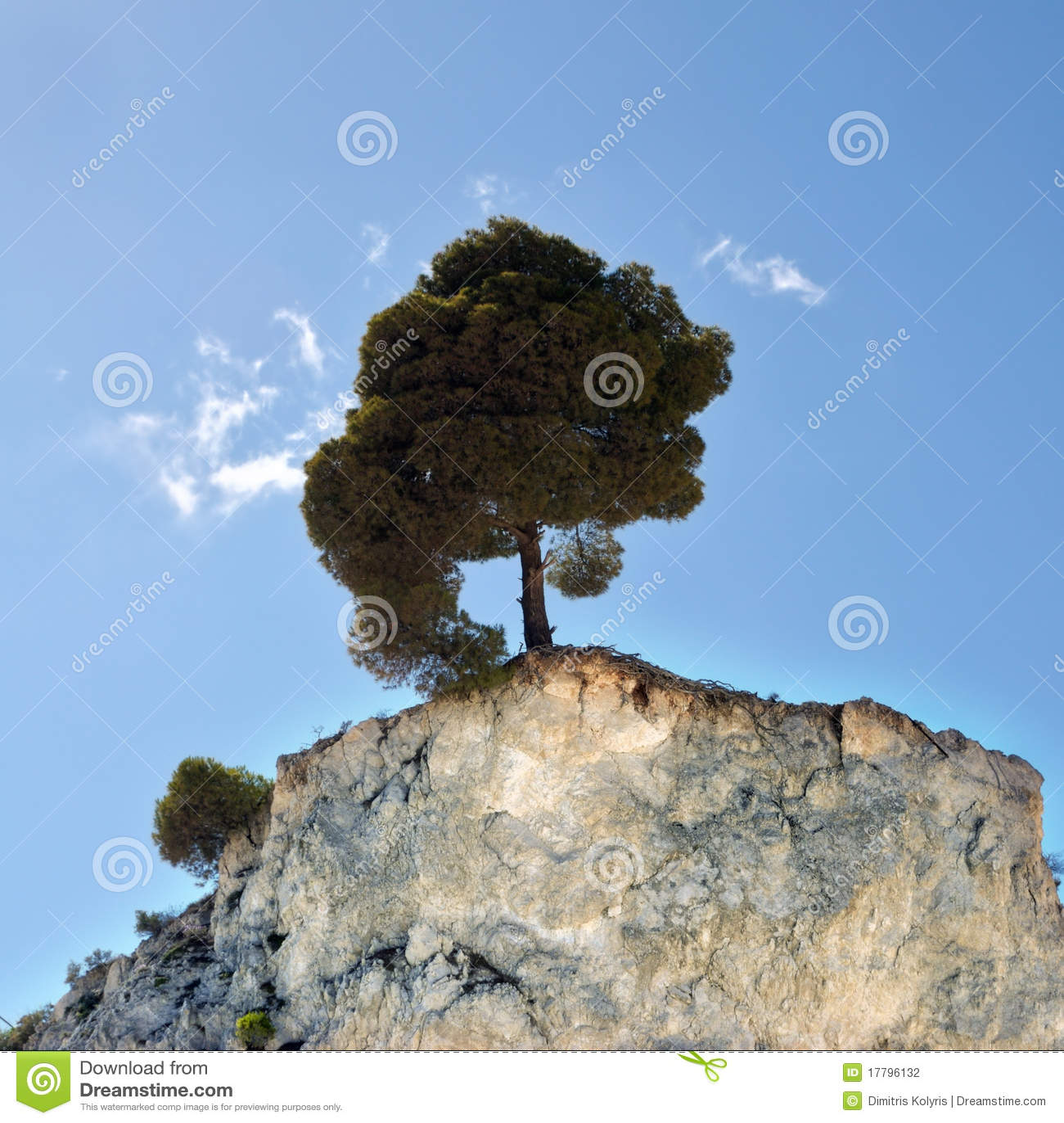 Seul arbre