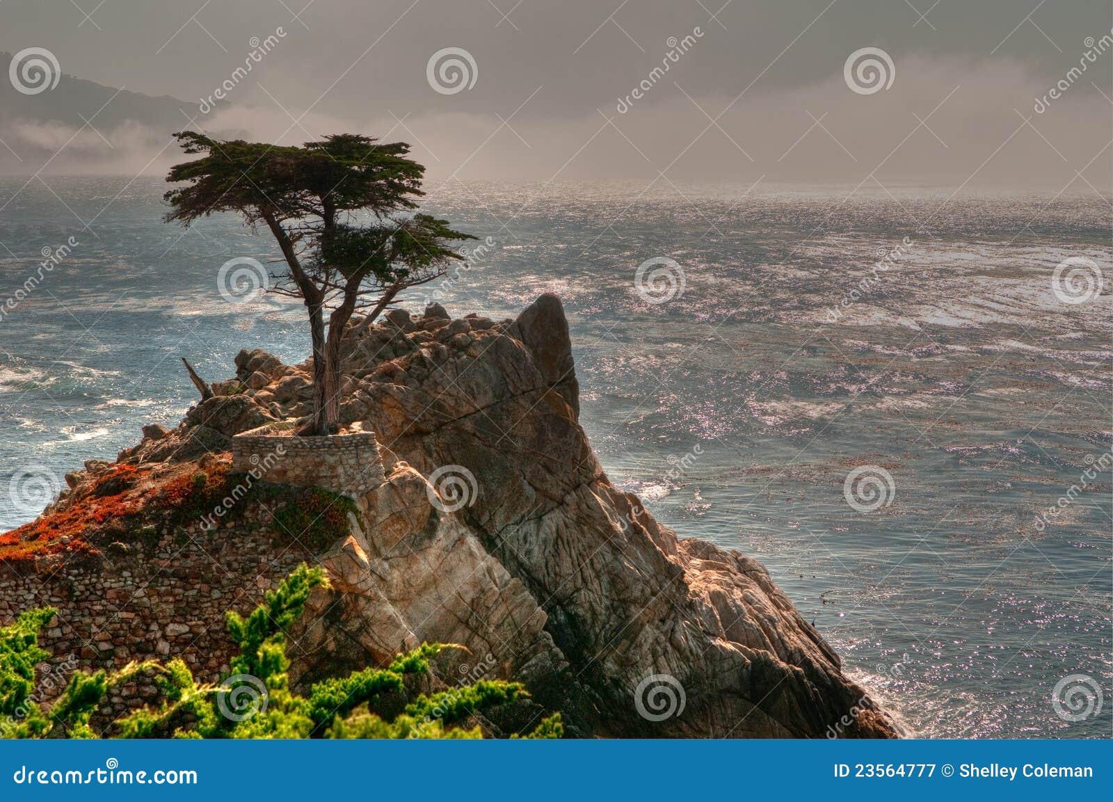 Seul arbre de Pebble Beach