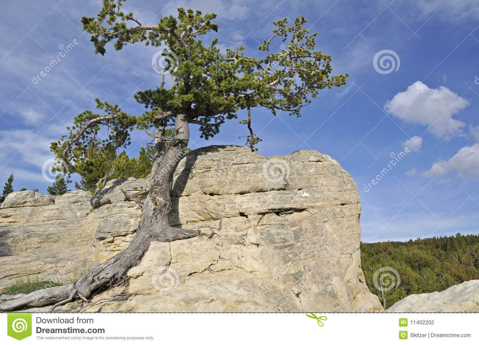 Seul arbre de Resiliant