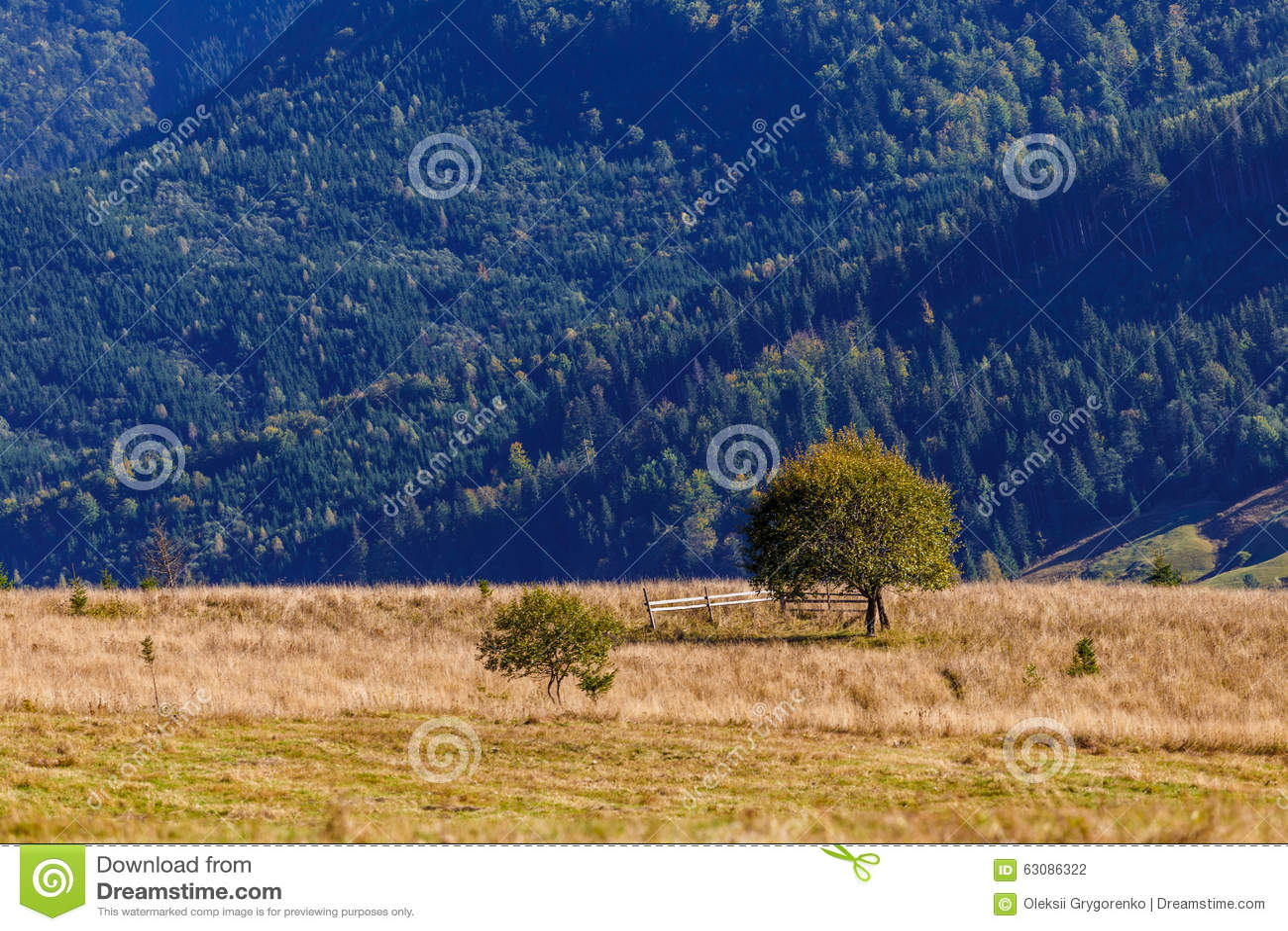 Download Seul Arbre Sur Le Fond En Bois Bleu Photo stock - Image du forêt, couleur: 63086322