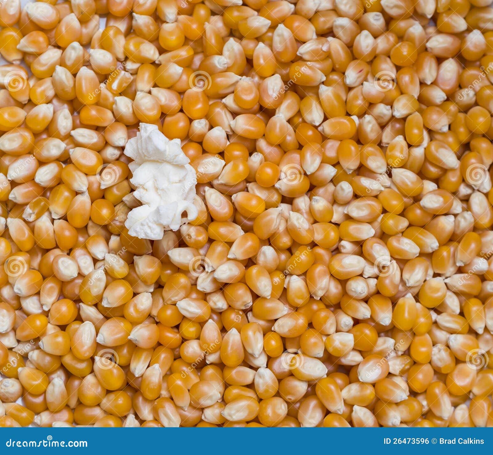 Seul concept de maïs éclaté
