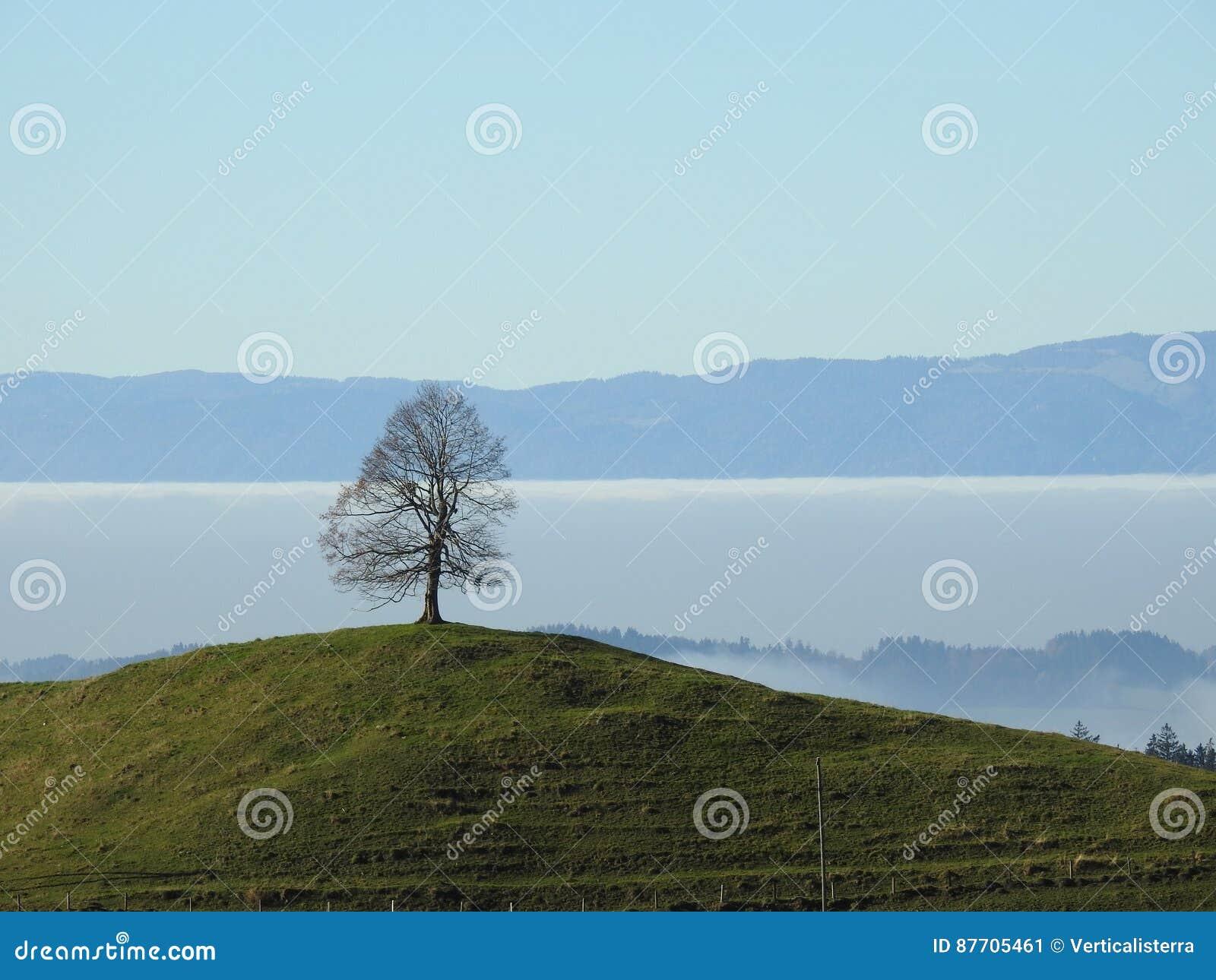 Seul l arbre