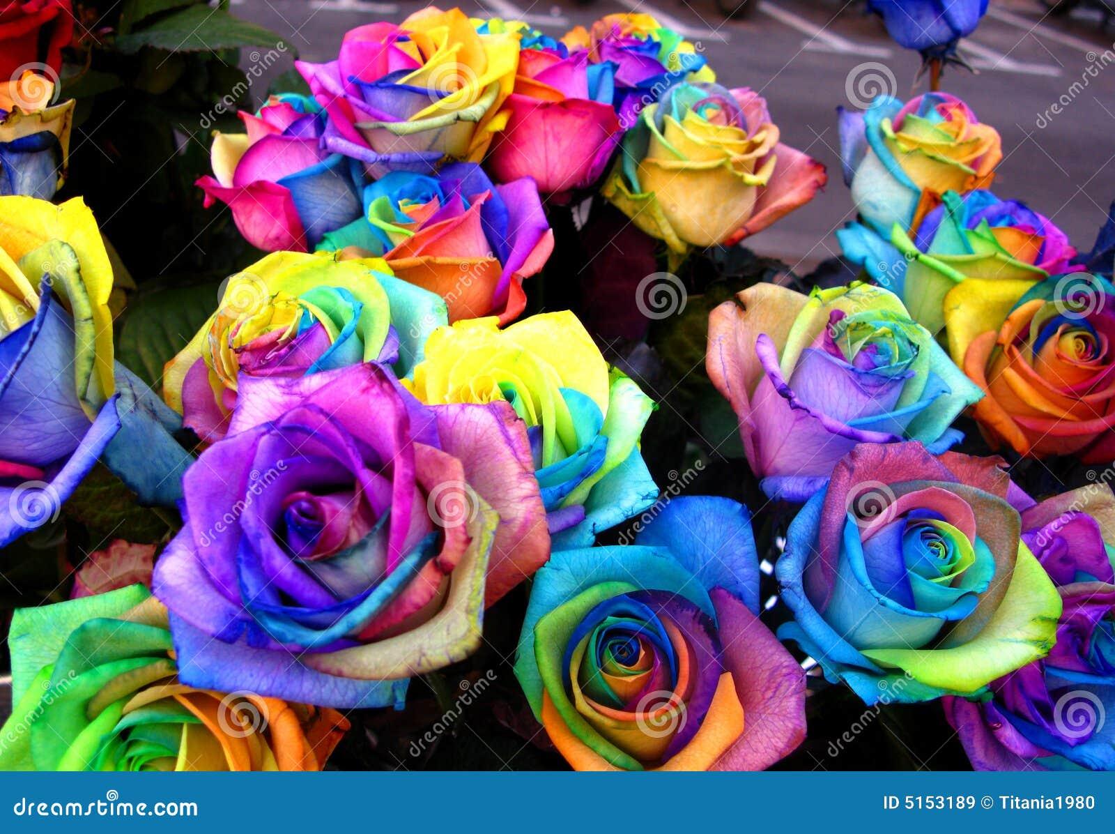 Seules roses d 39 arc en ciel image stock image du p tales - Image arc en ciel gratuite ...