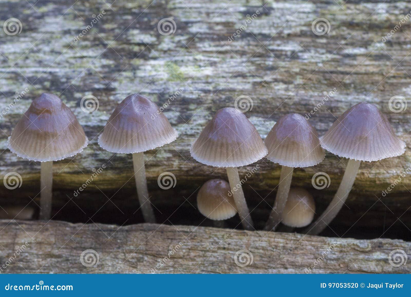Seven Fungi