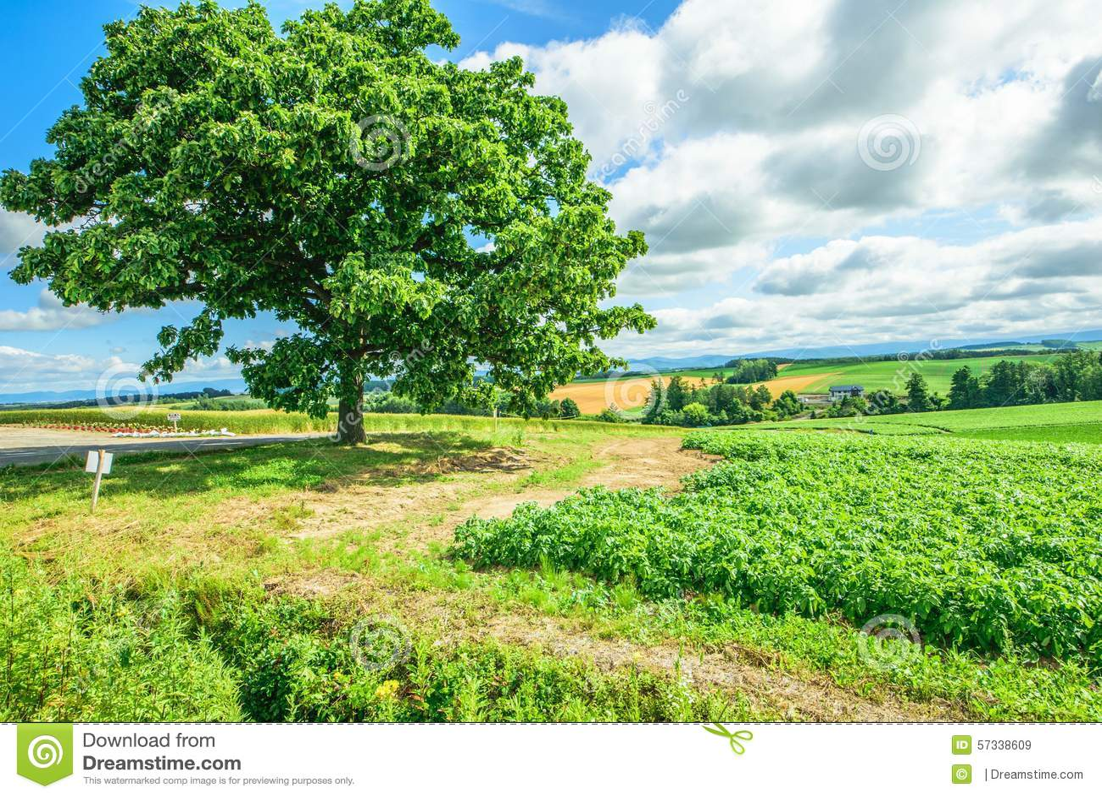 Seven Stars Tree Stock Photo Image 57338609