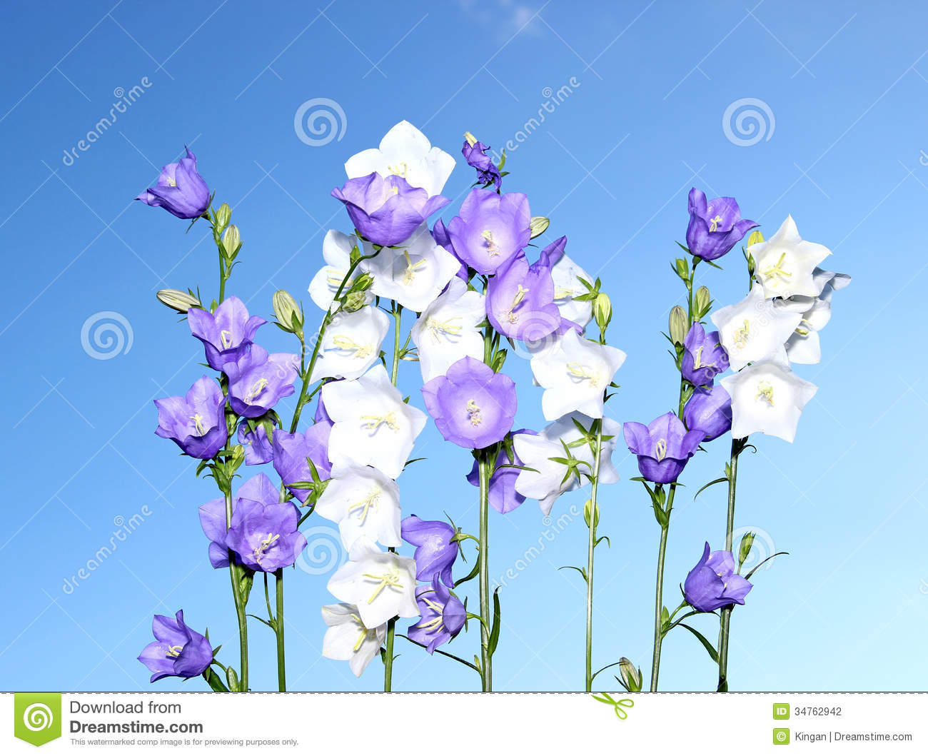 Several blue and white bell flowers stock photography image blue flowers sky white dhlflorist Image collections
