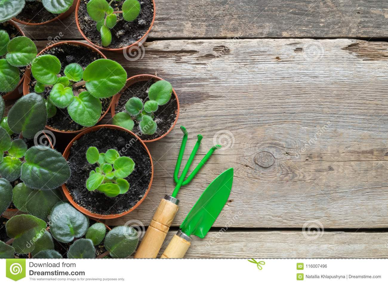 Several flowerpot of home plants. Planting potted flowers and garden tools.
